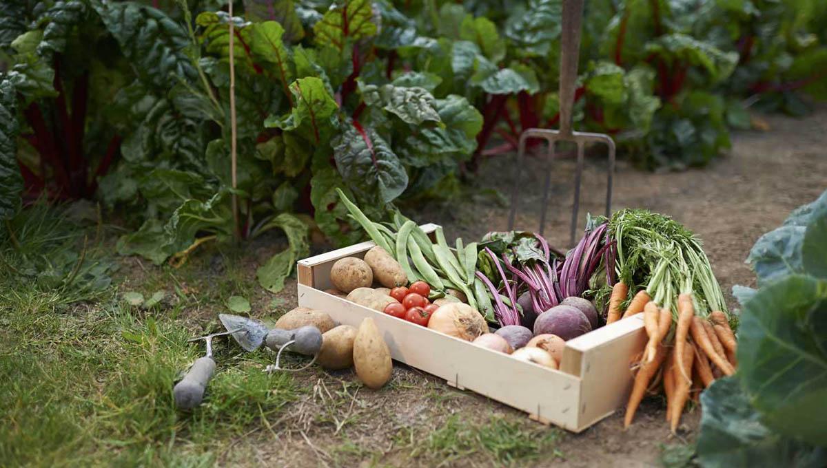 Meyve ve Sebze Bahçeleri Peyzaj Uygulama